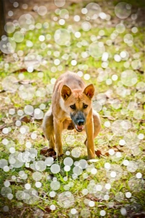 watery diarrhea in dogs causes of diarrhea in dogs nzymes
