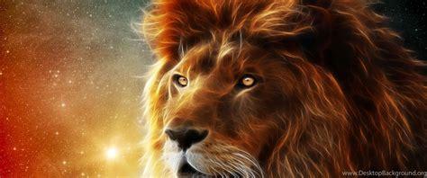 fonds decran lion tous les wallpapers lion desktop