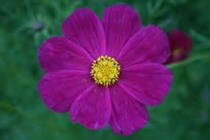 Flower Pic by Flower Hdwplan