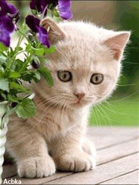 imagenes para celular con movimiento de mujeres gatitos gif con movimiento para m 243 viles o tel 233 fonos celulares