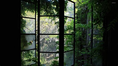 wallpaper of green house greenhouse window wallpaper photography wallpapers 31984