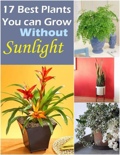 plants  grow  sunlight growing plants indoors