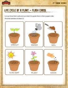 life cycle of a plant flash cards 2nd grade science