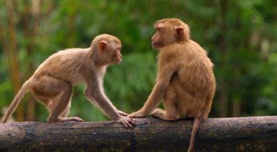 new year monkey animated gif monkey animated gif