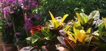 Outdoor Plants, Dubai Garden Centre