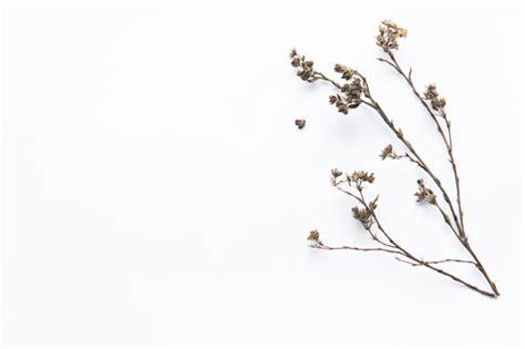 foto di fiori da scaricare gratis ramoscello di fiori secchi scaricare foto gratis