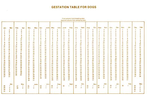 dogs gestation period pregnancy timeline calendar template 2016