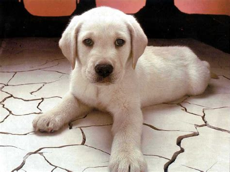 dogs food stuff cute puppy wallpapers