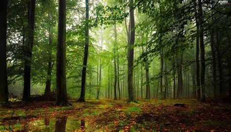 forest green forest green beautiful views wallpapers 2560x1465