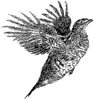 line art upland game birds