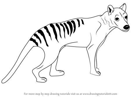 tasmanian tiger coloring page learn how to draw a tasmanian tiger wild animals step by