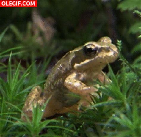 imagenes groseras de la rana gif rana en la hierba gif 5743