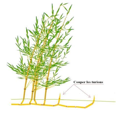 Que Faire Avec Des Bambous Coupés mes bambous limiter l extension