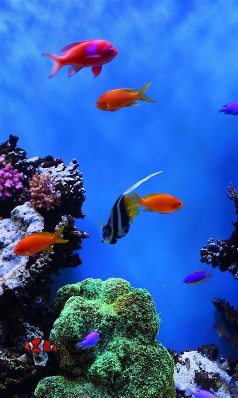 wallpaper for pc and mobile fish mobile wallpaper picture image