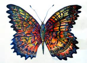 Butterfly drawings images amp pictures becuo