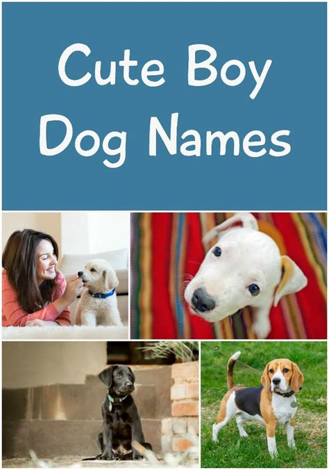 puppy names for boys best 25 boy names ideas on names for dogs boys boy puppy names and