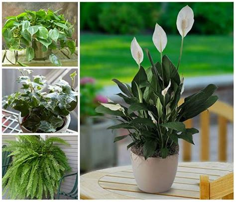 beautiful house plants 17 beautiful house plants that can actually purify your