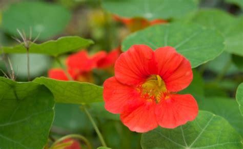 fiori primaverili da balcone fiori primaverili da balcone idee per interni e mobili