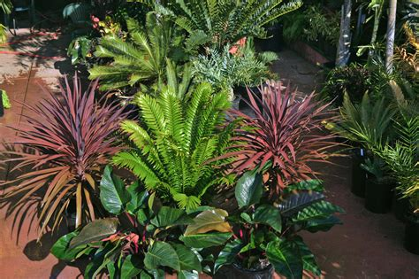 what are tropical plants palm tree nursery san diego