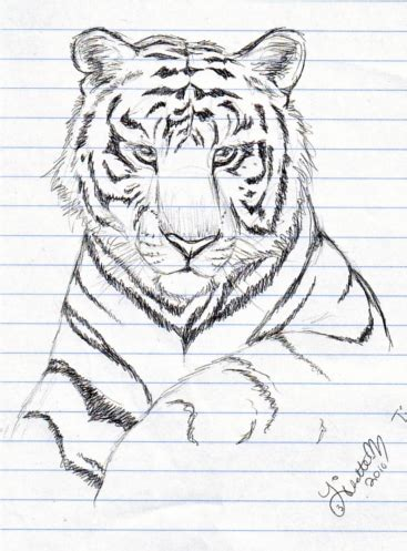 Cool Things To Draw Realistically by Realistic Tiger Sketch By Lisette M On Deviantart