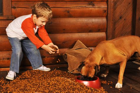when to start feeding puppies what food should you buy humans for dogs