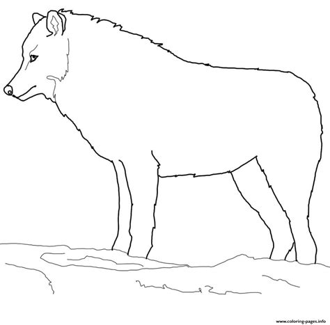 coloring page arctic wolf arctic wolf coloring pages printable