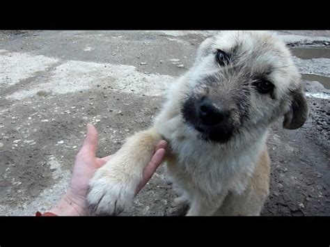 abandoned puppy puppy abandoned on a busy road gets rescued just in time