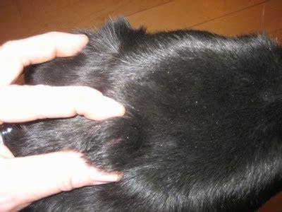dermoid cysts tick bite, or tumor?