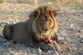 animales herbívoros imagenes alimentaci 211 els animals