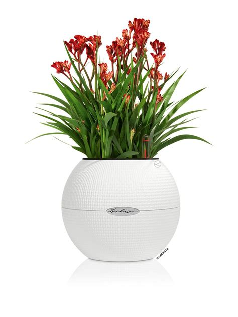 small self watering pots sphere planter puro 20 small self watering planter