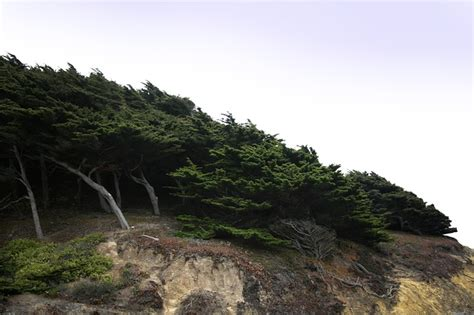 cliff hills cypress wind trees cliff hill nature woods public