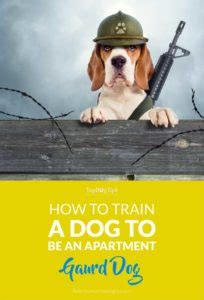 how to train your dog to guard your house how to train a dog to be an apartment guard dog for protection