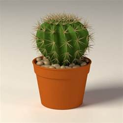 Cactus Planter 3d Model Of Cactus Pot