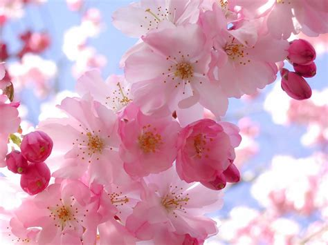 spring floral spring season theme trees and flowers images pixhome