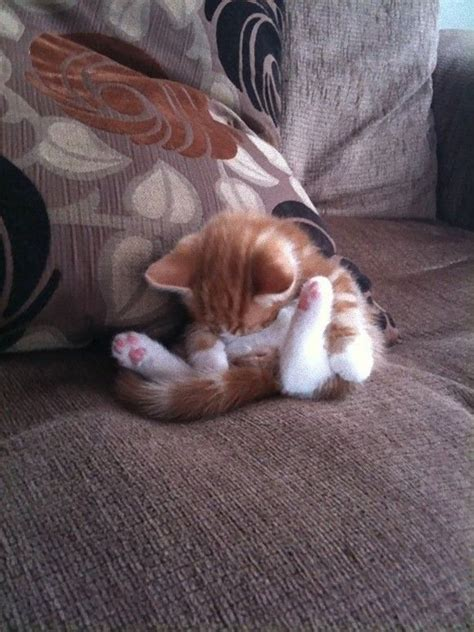 cat on the sofa 20 irresistably cute photos of cats sleeping