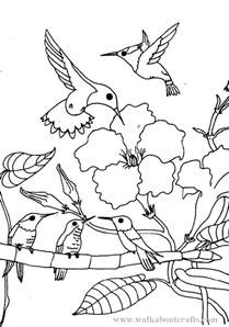 coloring sheets for printable hummingbird coloring pages coloring me