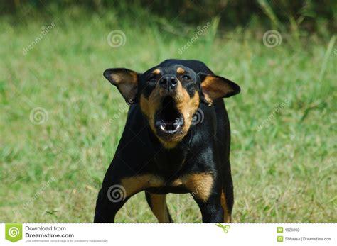 vicious barking vicious stock photography image 1326892