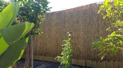 backyard x scapes reed fencing best 25 reed fencing ideas on pinterest tropical