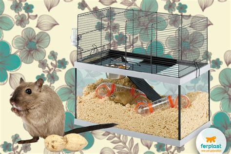 gabbia per gerbilli roditori in casa quale scegliere criceti scoiattoli e