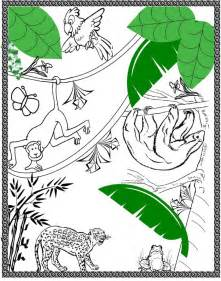 rainforest colors rainforest biome coloring pages bestsellerbookdb