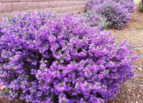 flowering garden plants best 25 low maintenance landscaping ideas only on