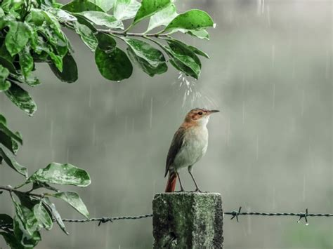 images of love birds in rain rainy day wallpapers page 2 one hd wallpaper pictures