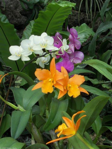 orchideen im garten orchideen ausstellung im botanischen garten rombergpark