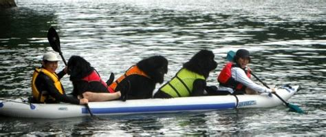 kayak for dogs can dogs go in an kayak