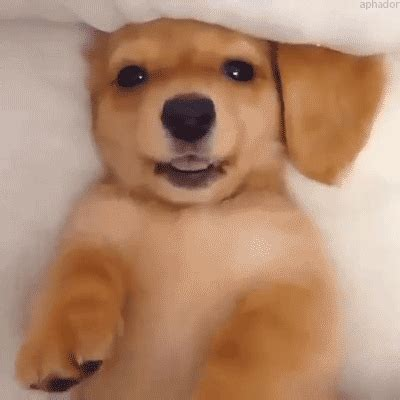 has puppies tinder wink gif find on giphy