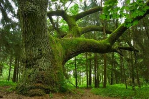 tree big w bacteria on growth trees may help forests grow