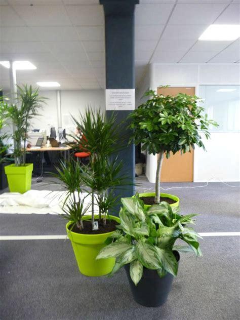 plantes bureau d 233 coration bureau plantes exemples d am 233 nagements