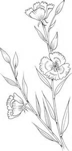 clarkia amoena farewell  spring coloring page