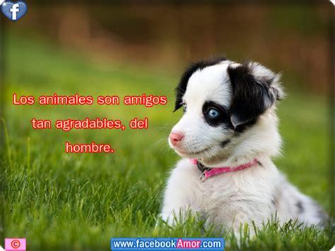 imagenes de animales con frases bonitas imagenes con frases bonitas a los animales etiquetar en