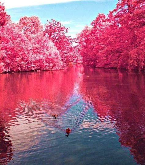 pink lake the pink lake australia beautiful places pinterest